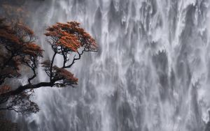 Devil's Punchbowl waterfall, New Zealand