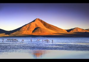 At sunset - Laguna Colorada (Red Lagoon),Bolivia