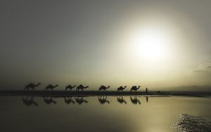Salt caravans of the Danakil Depression,Ethiopia